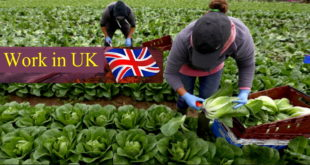 How to Get Easy UK Visa ,farmer worker uk visa