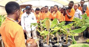 Young Africa Works IITA 2020